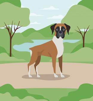 Het leuke huisdier van de bokserhond in het kamp
