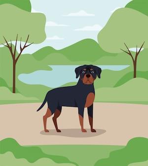 Het leuke huisdier van de rottweilerhond in het kamp