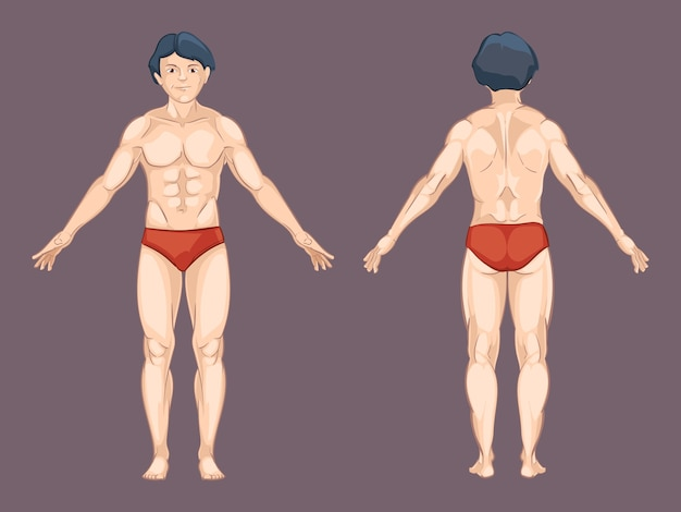 Het lichaam van de man voor en achter vormt. mannelijke mens, anatomie aan de voorkant, atletisch naakt. vectorillustratie in cartoon-stijl