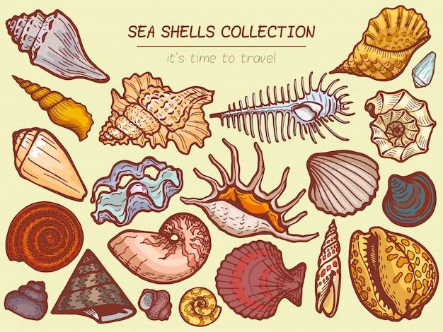 Het pictogram van zeeschelpeninzamelingen, tijd om het beeldverhaalillustratie van de reclamebanner te reizen. verken de fauna van de oceaanflora, de fauna aan zee.