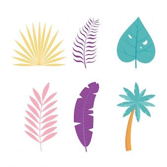 Het tropische palmblad verlaat de botanische illustratie van gebladertepictogrammen