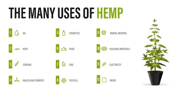 Het vele gebruik van hennep, witte poster met infographic van gebruik van cannabis en greenbush van cannabisplant Premium Vector