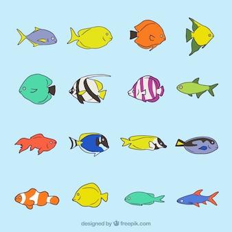 Het verzamelen van de hand getekende exotische vissen
