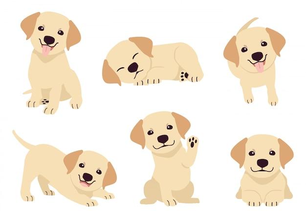 Het verzamelen van puppy labrador retriever in vele acties.
