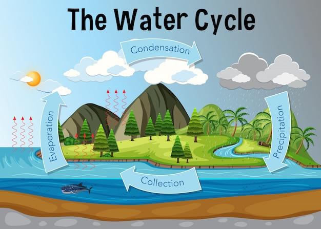 Het watercyclusdiagram