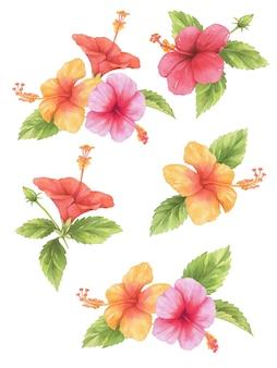 Hibiscus bloem aquarel