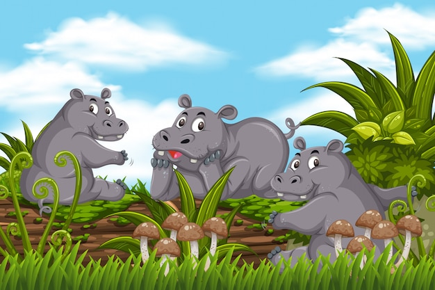 Hippo in jungle scene