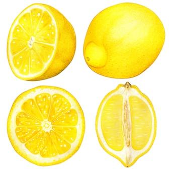 Hoge kwaliteit hand getekende aquarel citroen illustratie