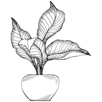 Home plant in potten schets. overzicht tekening geïsoleerde illustratie van het kweken van bloemen in een hangende plant voor interieur thuis of op kantoor decoratie. van tuinbloemen.