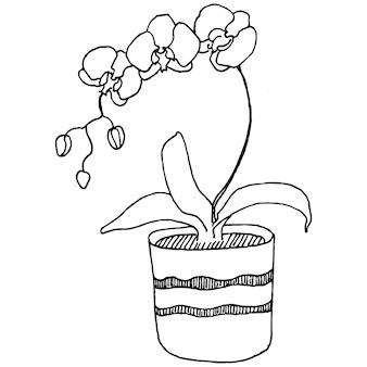 Home plant in potten schets. overzicht tekening geïsoleerde illustratie van het kweken van bloemen in een hangende plant voor interieur thuis of op kantoor decoratie.