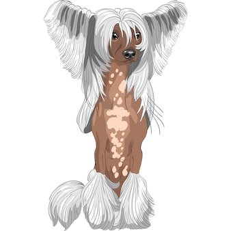 Hond chinese crested ras