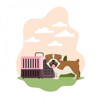 Hond en huisdier transportdoos met landschap