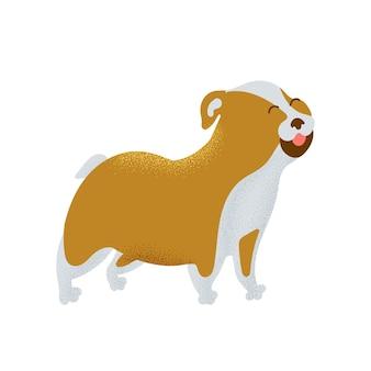 Hond franse bulldog