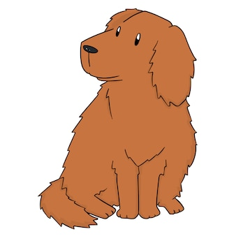 Hond, golden retriever