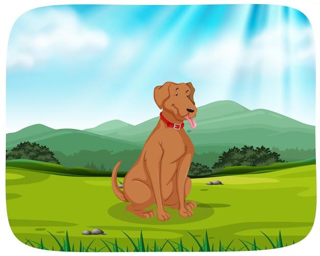 Hond in parkscène