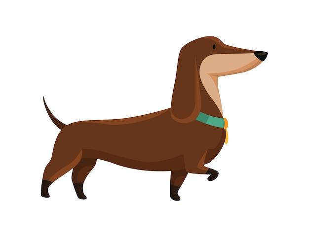 Hond teckel. leuk grappig karakterportret. kortbenig huisdier met lang lichaam gaat. schattige cartoon vectorillustratie
