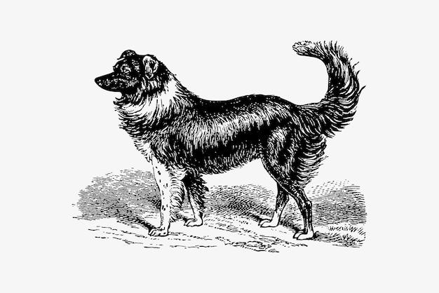 Hond vintage tekening