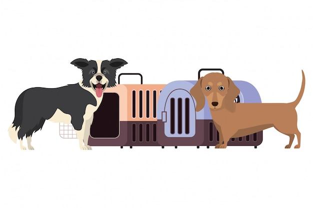Honden en huisdierenvervoerdozen op wit