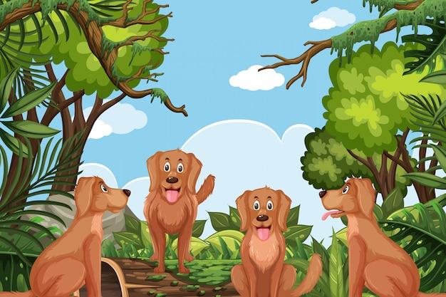 Honden in jungle scene