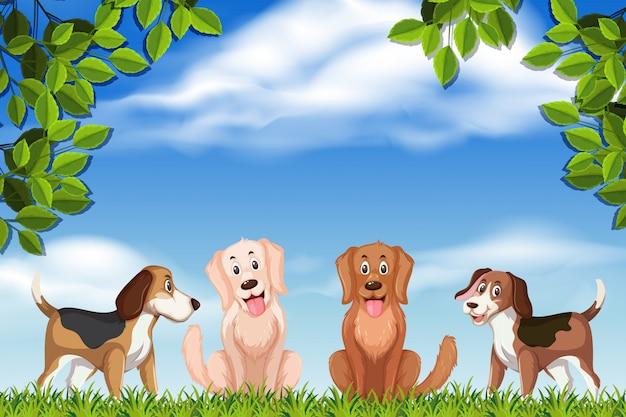 Honden in parkscène
