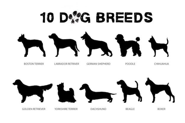 Honden rassen