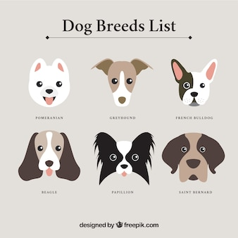 Hondenrassen lijst