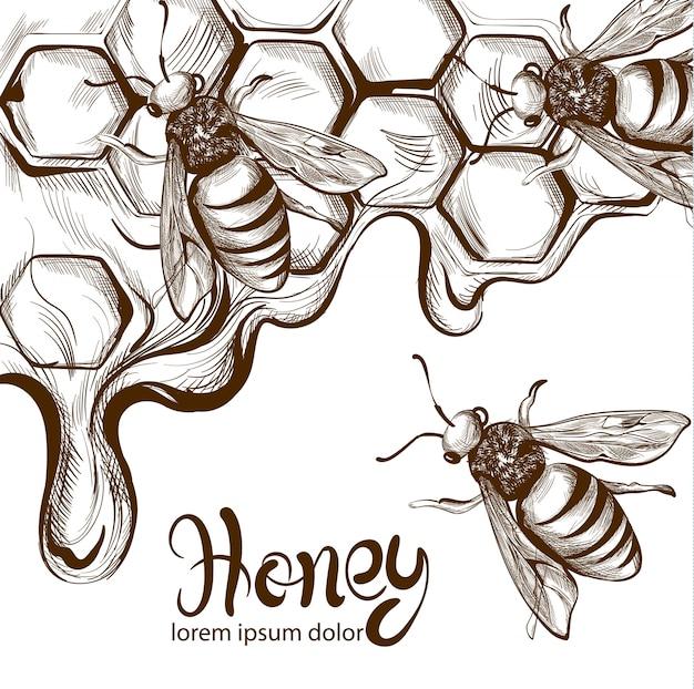 Honing bijen kammen lijntekeningen