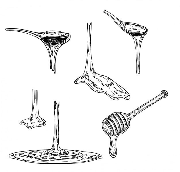Honing of ahornsiroop wordt afgetapt uit een lepel. schetsen. viskeuze substantie die van een lepel druipt. illustratie op witte achtergrond.