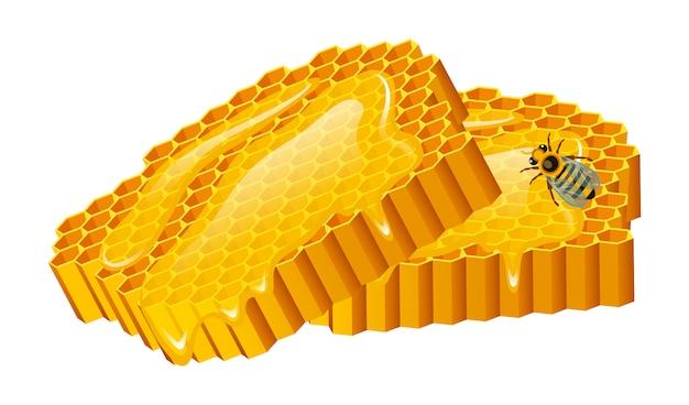 Honing set, bijen en korf, honingraat, korf en bijenstal. natuurlijk landbouwproduct. bijenteelt of tuin, bloemkamille.