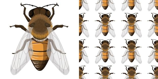 Honingbij en naadloze achtergrond