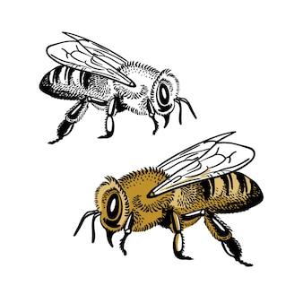 Honingbijen geïsoleerd