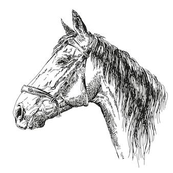 Hoofd van mooi paard met hoofdstel in profiel. vector hand tekenen zwart-wit afbeelding.