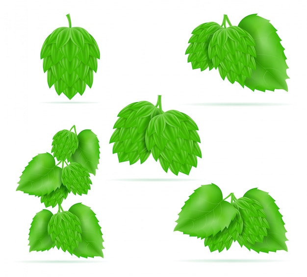 Hop rijp en groen bier voorbereiding ingrediënt