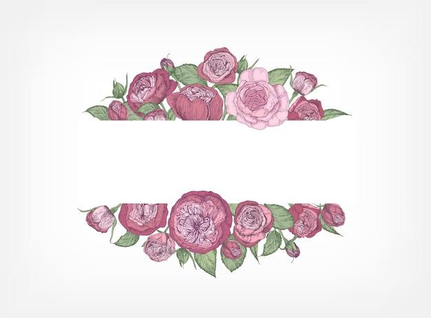 Horizontale banner versierd met bloeiende tuin engelse rozen.