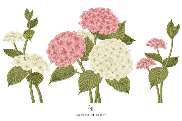 Hortensia bloem decoratieve set geïsoleerd op wit