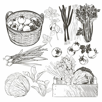 Houten kist vol met verse groenten en kruiden