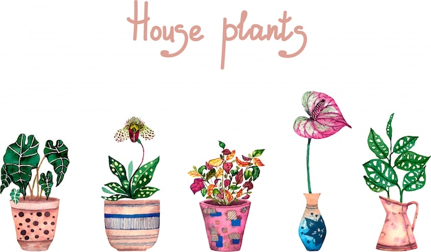 Huis planten aquarel set