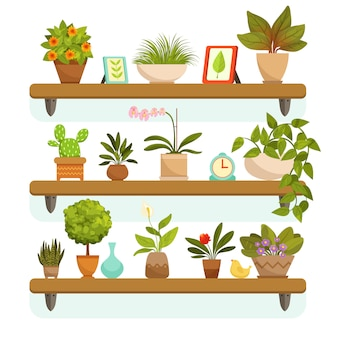 Huisplanten en decoratieve bloemen in potten, staande op de planken