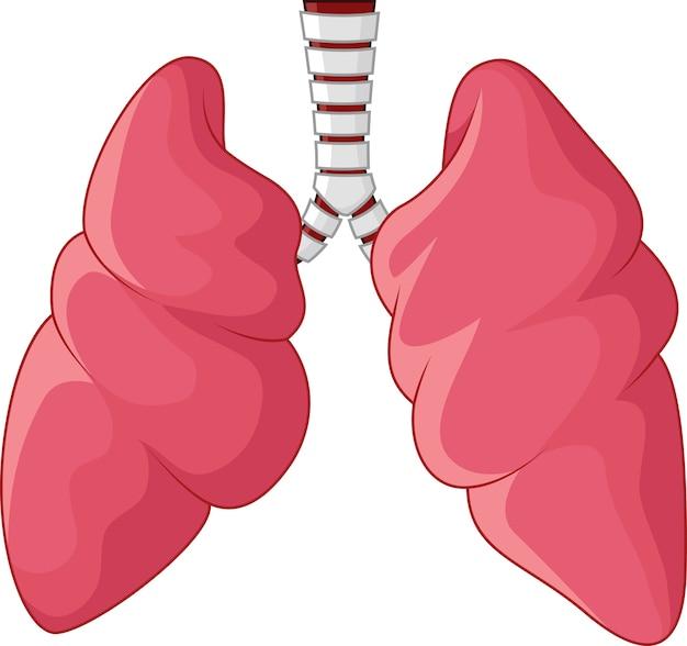 Human longen luchtwegen cartoon