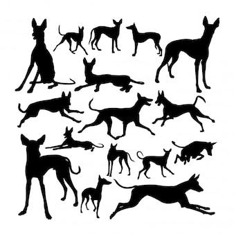 Ibizan hound dog animal silhouettes