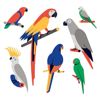 Icon set van papegaaien. eclectus-papegaai, scharlaken ara, afrikaanse grijze papegaai, grasparkiet, kaketoe met grote kuif, ringhalsparkiet.