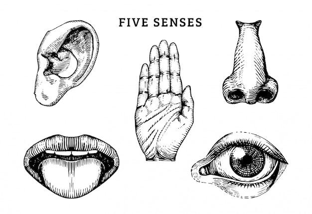 Iconen set van vijf menselijke zintuigen in gegraveerde stijl.