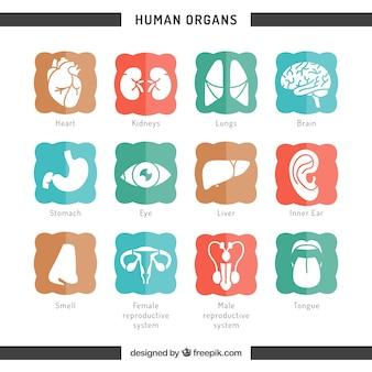 Iconen van de menselijke organen