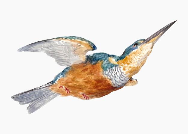 Ijsvogel illustratie vector, geremixt van kunstwerken van aert schouman