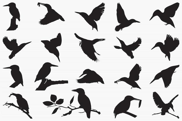 Ijsvogels silhouetten