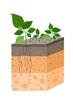 Illustratie bodemprofiel met plant, ras van de horizon van de bodem. stuk grond met plant en wortels in e.