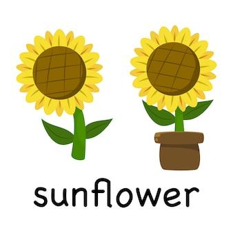 Illustratie cute cartoon zonnebloem geïsoleerd op een witte achtergrond, minimalistische stijl, botanische Premium Vector