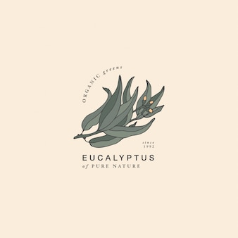 Illustratie eucalyptus blauwe tandvlees tak - vintage gegraveerde stijl. logo samenstelling in retro botanische stijl.