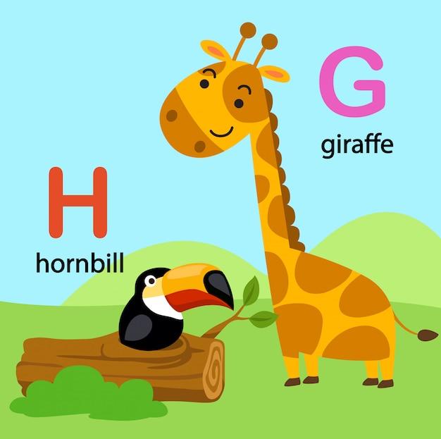 Illustratie geïsoleerde alfabet letter g-giraf, h-neushoornvogel,