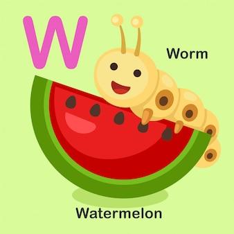 Illustratie geïsoleerde dierlijke alfabet letter w-watermeloen, worm